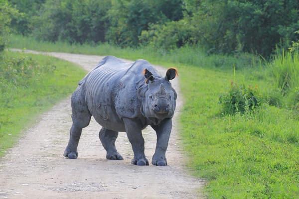 Best way to Experience Kaziranga National Park Safari