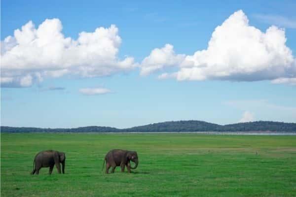 Safari Park, Ridiyagama - Places to visit in Sri Lanka in 5 days